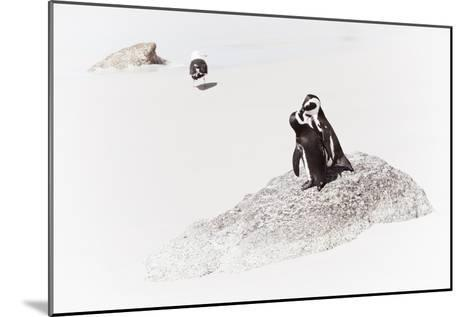 Awesome South Africa Collection - Penguin Lovers II-Philippe Hugonnard-Mounted Photographic Print