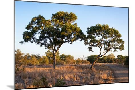 Awesome South Africa Collection - Savanna Trees at Sunset-Philippe Hugonnard-Mounted Photographic Print