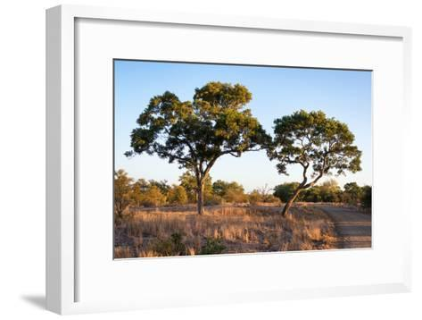 Awesome South Africa Collection - Savanna Trees at Sunset-Philippe Hugonnard-Framed Art Print