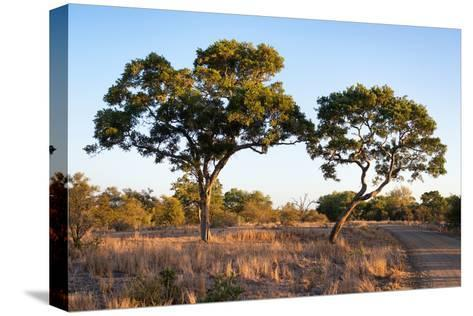 Awesome South Africa Collection - Savanna Trees at Sunset-Philippe Hugonnard-Stretched Canvas Print