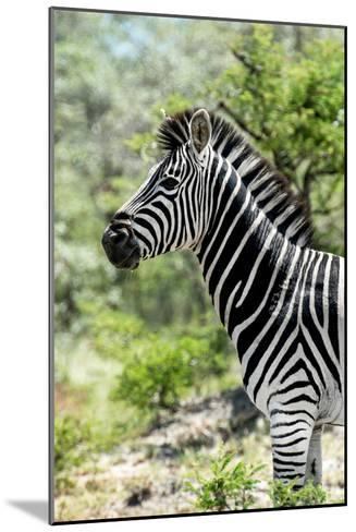 Awesome South Africa Collection - Burchell's Zebra X-Philippe Hugonnard-Mounted Photographic Print