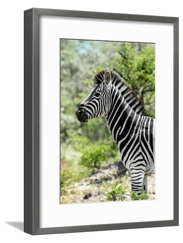 Awesome South Africa Collection - Burchell's Zebra X-Philippe Hugonnard-Framed Art Print