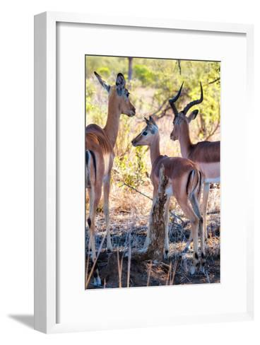 Awesome South Africa Collection - Impala Family I-Philippe Hugonnard-Framed Art Print