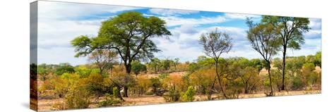 Awesome South Africa Collection Panoramic - Beautiful Savannah Landscape-Philippe Hugonnard-Stretched Canvas Print