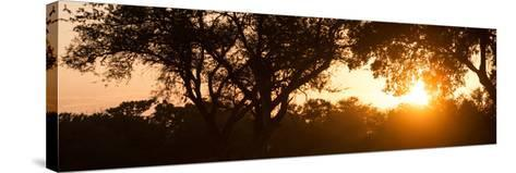 Awesome South Africa Collection Panoramic - African Sunrise Trees-Philippe Hugonnard-Stretched Canvas Print