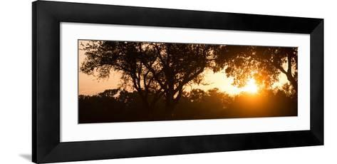 Awesome South Africa Collection Panoramic - African Sunrise Trees-Philippe Hugonnard-Framed Art Print