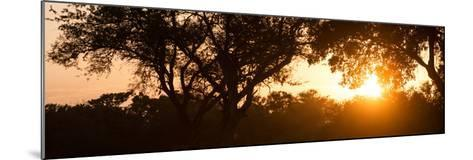 Awesome South Africa Collection Panoramic - African Sunrise Trees-Philippe Hugonnard-Mounted Photographic Print