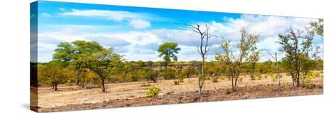 Awesome South Africa Collection Panoramic - Beautiful Savannah Landscape III-Philippe Hugonnard-Stretched Canvas Print
