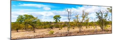 Awesome South Africa Collection Panoramic - Beautiful Savannah Landscape III-Philippe Hugonnard-Mounted Photographic Print