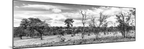 Awesome South Africa Collection Panoramic - Beautiful Savannah Landscape II B&W-Philippe Hugonnard-Mounted Photographic Print