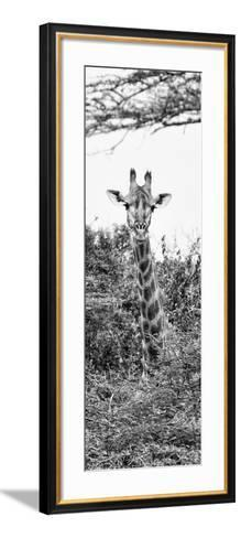 Awesome South Africa Collection Panoramic - Curious Giraffe II B&W-Philippe Hugonnard-Framed Art Print