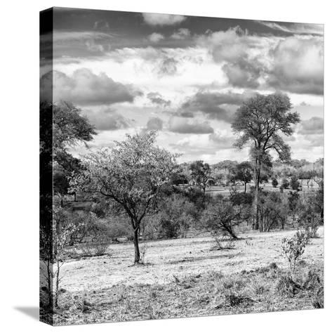Awesome South Africa Collection Square - Savanna Landscape IV B&W-Philippe Hugonnard-Stretched Canvas Print