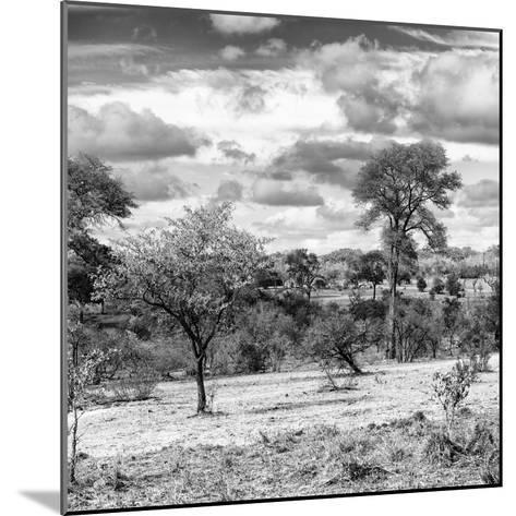 Awesome South Africa Collection Square - Savanna Landscape IV B&W-Philippe Hugonnard-Mounted Photographic Print