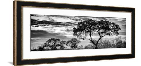 Awesome South Africa Collection Panoramic - Tree Silhouetted at Sunset B&W-Philippe Hugonnard-Framed Art Print