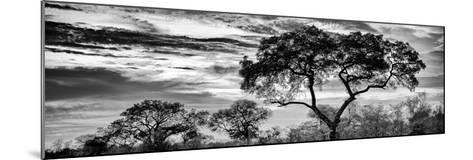 Awesome South Africa Collection Panoramic - Tree Silhouetted at Sunset B&W-Philippe Hugonnard-Mounted Photographic Print