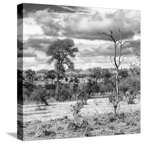 Awesome South Africa Collection Square - Savanna Landscape VI B&W-Philippe Hugonnard-Stretched Canvas Print
