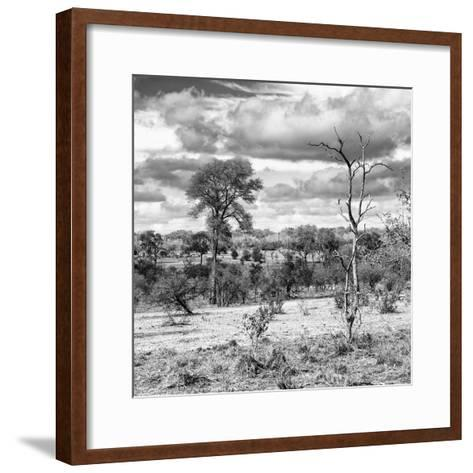 Awesome South Africa Collection Square - Savanna Landscape VI B&W-Philippe Hugonnard-Framed Art Print