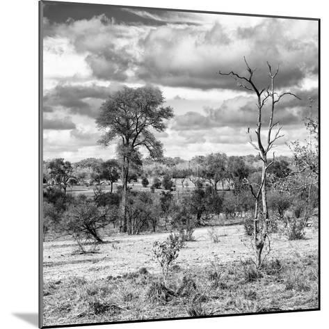 Awesome South Africa Collection Square - Savanna Landscape VI B&W-Philippe Hugonnard-Mounted Photographic Print
