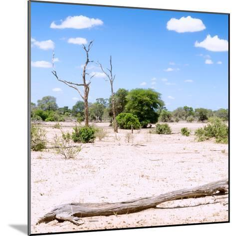 Awesome South Africa Collection Square - Savannah Landscape III-Philippe Hugonnard-Mounted Photographic Print