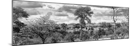 Awesome South Africa Collection Panoramic - Beautiful Savannah Landscape III B&W-Philippe Hugonnard-Mounted Photographic Print