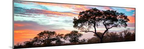 Awesome South Africa Collection Panoramic - Tree Silhouetted at Sunset-Philippe Hugonnard-Mounted Photographic Print