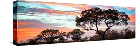 Awesome South Africa Collection Panoramic - Tree Silhouetted at Sunset-Philippe Hugonnard-Stretched Canvas Print