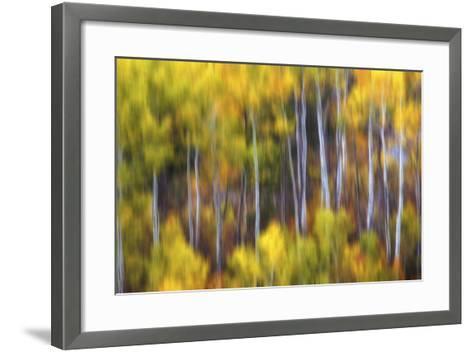 Aspens Alive-Darren White Photography-Framed Art Print