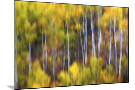 Aspens Alive-Darren White Photography-Mounted Photographic Print