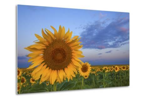 Sunny Side Up-Darren White Photography-Metal Print