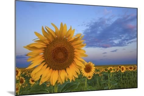 Sunny Side Up-Darren White Photography-Mounted Photographic Print