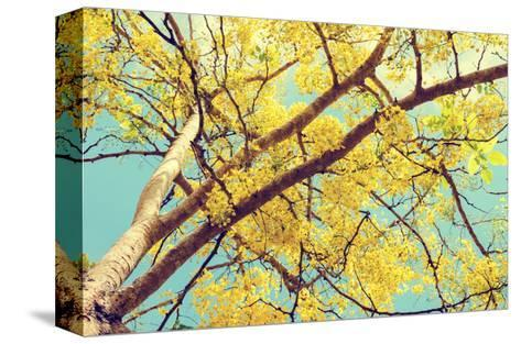 Vintage Style, Hight up Beautiful Yellow Flowers on Tree of Purging Cassia or Ratchaphruek ( Cassis-Yongkiet-Stretched Canvas Print