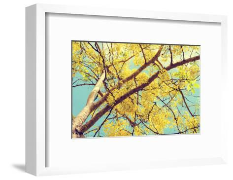 Vintage Style, Hight up Beautiful Yellow Flowers on Tree of Purging Cassia or Ratchaphruek ( Cassis-Yongkiet-Framed Art Print