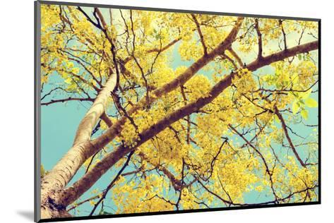 Vintage Style, Hight up Beautiful Yellow Flowers on Tree of Purging Cassia or Ratchaphruek ( Cassis-Yongkiet-Mounted Art Print