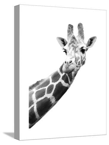 Giraffe--Stretched Canvas Print