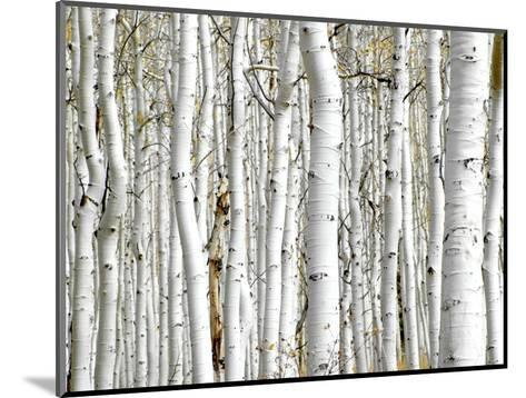 Birch Wood-PhotoINC-Mounted Art Print