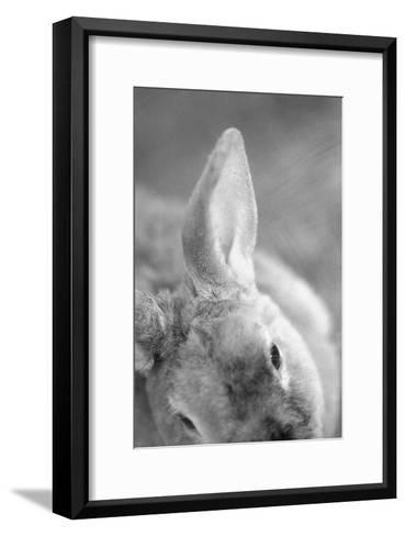 Rabbit's Ear-Henry Horenstein-Framed Art Print