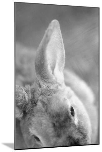 Rabbit's Ear-Henry Horenstein-Mounted Art Print