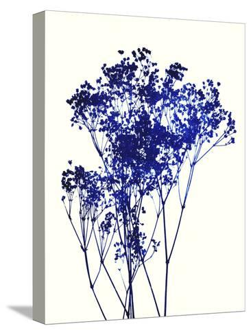 Baby's Breath-Garima Dhawan-Stretched Canvas Print