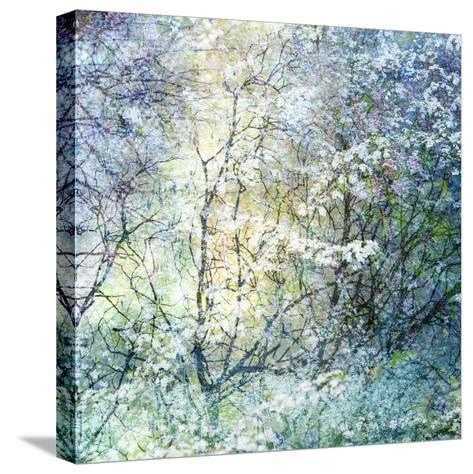 Floral Froth II-Doug Chinnery-Stretched Canvas Print