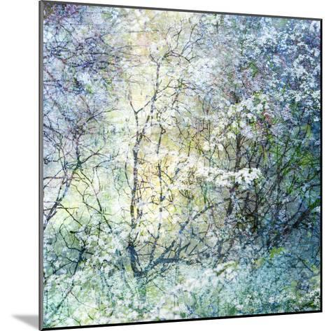 Floral Froth II-Doug Chinnery-Mounted Photographic Print