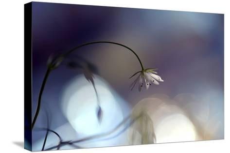 Good Night-Heidi Westum-Stretched Canvas Print