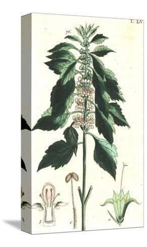 Flowering Stems Botanical Illustrations--Stretched Canvas Print