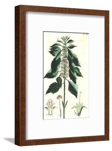 Flowering Stems Botanical Illustrations--Framed Art Print