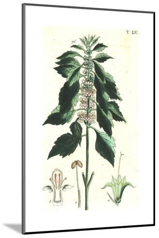 Flowering Stems Botanical Illustrations--Mounted Art Print