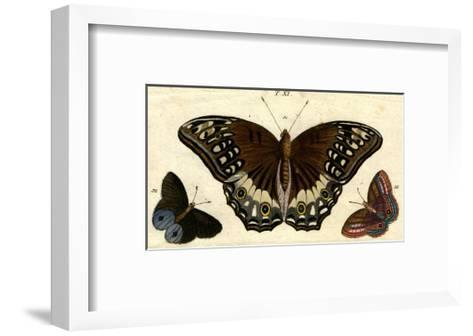 Scientific Illustrations of Butterflies and Insects--Framed Art Print