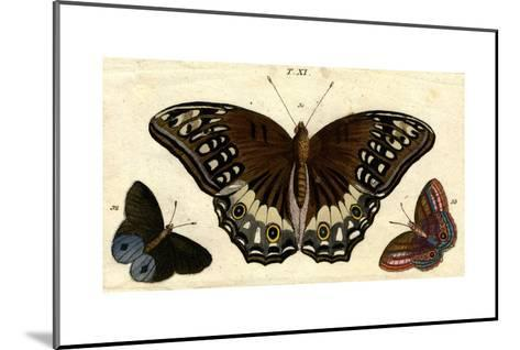 Scientific Illustrations of Butterflies and Insects--Mounted Art Print