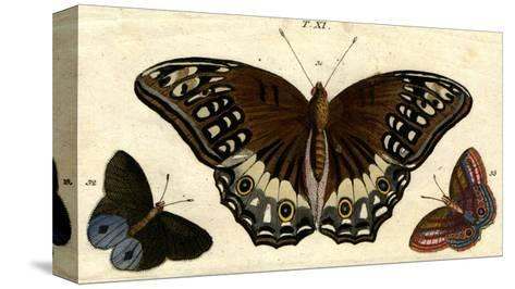 Scientific Illustrations of Butterflies and Insects--Stretched Canvas Print