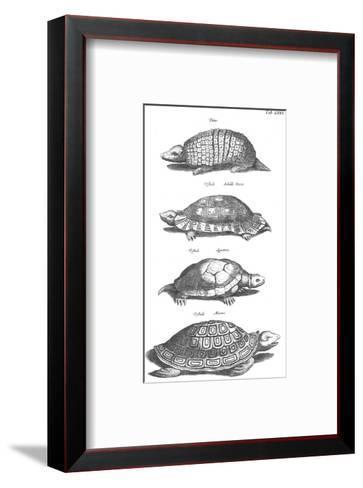 Black and White Turtles in Profile--Framed Art Print