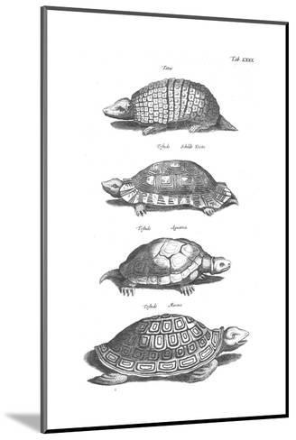 Black and White Turtles in Profile--Mounted Art Print