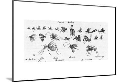 Scientific Illustrations of Mosquitos in Black and White--Mounted Art Print